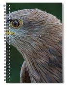 Yellow-beaked Kite Spiral Notebook