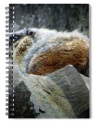 Yellow Bellied Marmot - Glacier National Park Spiral Notebook