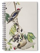 Yellow Bellied Woodpecker Spiral Notebook