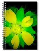 Yellow Buttercup On Black Background Spiral Notebook