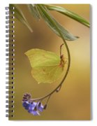 Yellow Butterfly On Blue Forget-me-not Flowers Spiral Notebook