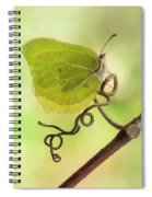 Yellow Butterfly On The Branch Spiral Notebook