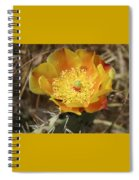 Yellow Cactus Flower On Display Spiral Notebook