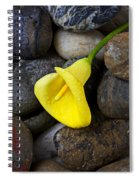 Yellow Calla Lily On Rocks Spiral Notebook