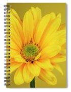 Yellow Chrysanthemum On Yellow Spiral Notebook