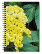Yellow Cockscomb Spiral Notebook