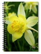 Yellow Columbine 3 Spiral Notebook
