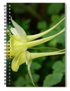 Yellow Columbine Profile Spiral Notebook