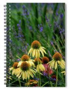 Yellow Coneflowers And Lavender 1633 H_2 Spiral Notebook