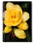 Yellow Crocus Closeup Spiral Notebook