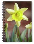 Yellow Daffodil Spiral Notebook
