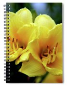 Yellow Daylilly 0204 H_2 Spiral Notebook