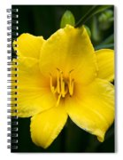 Yellow Daylily Flower Spiral Notebook