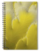 Yellow Feather Spiral Notebook