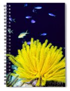Yellow Feather Star Spiral Notebook