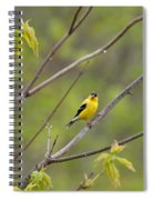 Yellow Finch In Spring Spiral Notebook