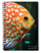 Yellow Fish Profile Spiral Notebook