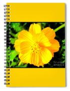 Yellow Flower On Black Background Spiral Notebook