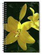 Yellow Garden Lilies Spiral Notebook