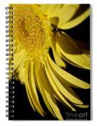 Yellow Gerbera Daisy By Kaye Menner Spiral Notebook