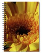 Yellow Gerbera Macro Spiral Notebook