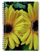 Yellow Gerberas Spiral Notebook