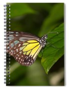 Yellow Glassy Tiger Butterfly Spiral Notebook