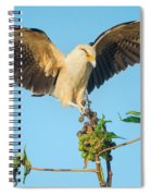 Yellow-headed Caracara Milvago Spiral Notebook