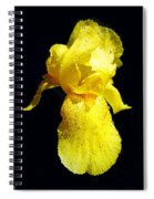 Yellow Iris After The Rain Spiral Notebook