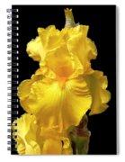 Yellow Iris Flower Still Life Spiral Notebook