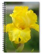 Yellow Iris Flowers Art Prints Cards Irises Summer Garden Landscape Spiral Notebook