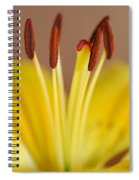 Yellow Lily Reach 1 Spiral Notebook