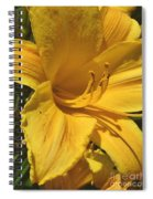 Yellow Lily Shines Brightly  Spiral Notebook