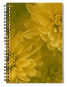 Yellow Mums Spiral Notebook