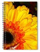 Yellow-orange Spiral Notebook