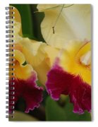 Yellow Purple Orchids Spiral Notebook