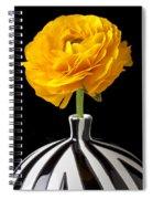 Yellow Ranunculus In Striped Vase Spiral Notebook