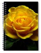 Yellow Rose 4 Spiral Notebook