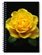 Yellow Rose 6 Spiral Notebook