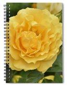 Yellow Rose IIi Spiral Notebook