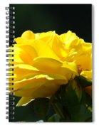 Yellow Rose Sunlit Rose Garden Landscape Art Baslee Troutman  Spiral Notebook