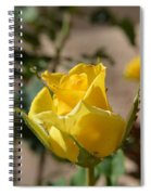 Yellow Rose With Ants Spiral Notebook