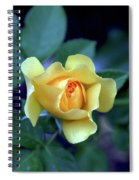 Yellow Rose With Purple Contrast 0357 H_2 Spiral Notebook