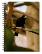 Yellow-rumped Cacique 3 Spiral Notebook