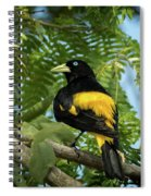 Yellow Rumped Cacique Spiral Notebook