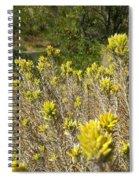 Yellow Sage Flower Spiral Notebook