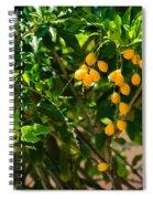 Yellow Seeds Spiral Notebook