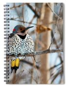 Yellow-shafted Northern Flicker Staying Warm Spiral Notebook