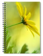 Yellow Spring Daisy Abstract By Kaye Menner Spiral Notebook