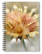 Yellow Star Thistle Spiral Notebook